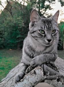 katt på stock