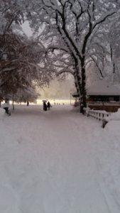 Snö i Vasaparken