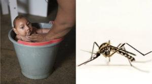 zika-sverige